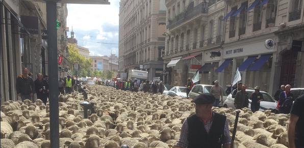 1OOO éleveurs, 1000 brebis pour demander 0 attaques