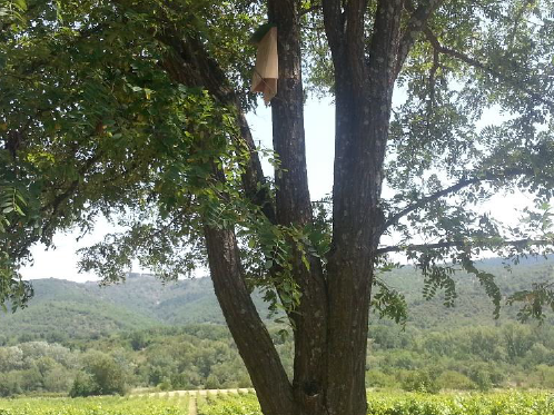 La chauve-souris au secours du vignoble ardéchois