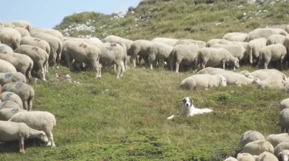Drôme: formation à l'utilisation des chiens de protection
