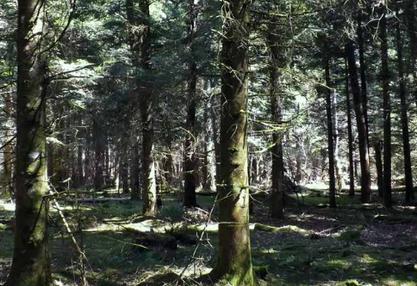 Forêts puydômoises: Un exemple de gestion tournée vers l'avenir