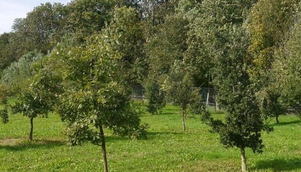 Isère : autorisation d'aller dans les truffières