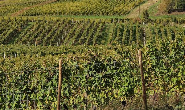 La Région se mobilise pour ses producteurs, agriculteurs et viticulteurs.