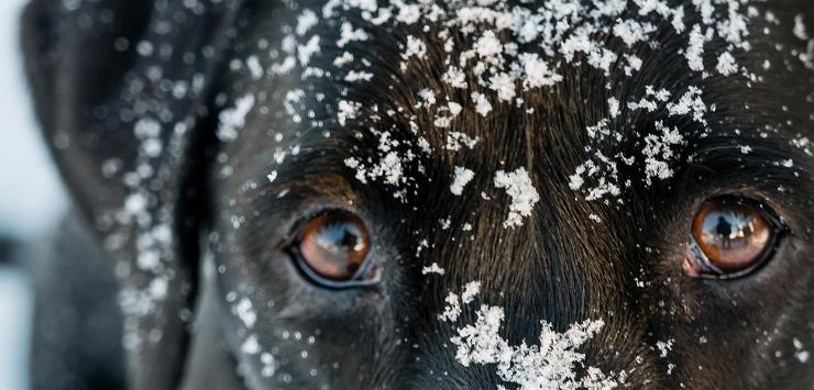 La Plagne: Un séjour au poil avec son chien
