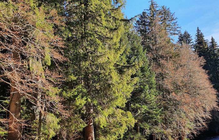 Plan France Relance : le renouvellement forestier est lancé