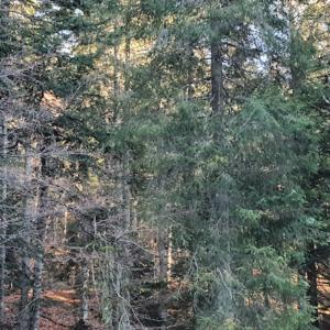 Guide de gestion des crises sanitaires en forêt