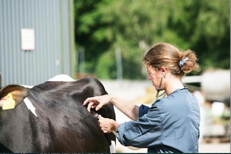 Les écoles nationales vétérinaires accessibles en post-bac sur Parcoursup