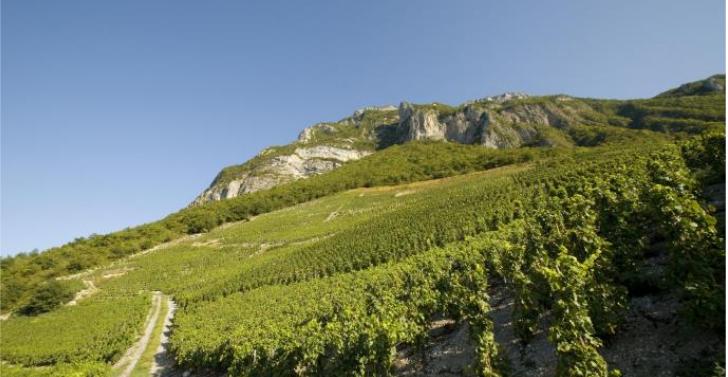 Les vins de Savoie si proches des sommets