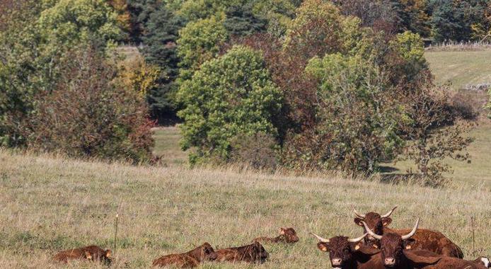 Agriculture: la Région réactive son Plan   Sécheresse