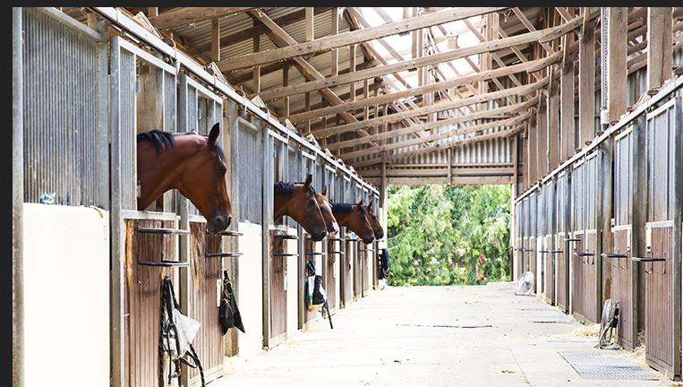 Aide sectorielle aux centres équestres et aux poney clubs recevant du public.