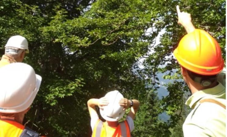"""""""Vis ma vie de bûcheron"""", au cœur des forêts d'Auvergne-Rhône-Alpes"""