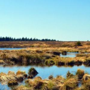 Drainage des tourbières pour l'agriculture : estimation des émissions de carbone sur le dernier millénaire