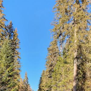 Enquête: La filière bois en Auvergne‑Rhône‑Alpes