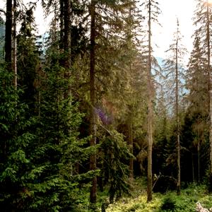 Forum forêt du Vercors et changement climatique